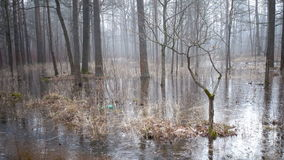 The spring wood flooded with water and which has frozen under ice stock footage
