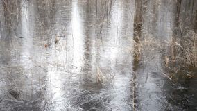 The spring wood flooded with water and which has frozen under ice stock video