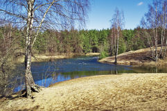 Spring wood and the river Royalty Free Stock Images