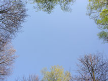 Spring Wood Sky Royalty Free Stock Photos