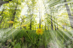 Spring wood Stock Photography