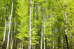 Spring wood of trees Stock Photography