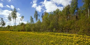 The spring wood Royalty Free Stock Images