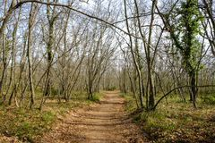 Spring wood in tuscany, Italy royalty free stock photography