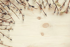 Spring wooden background with branches of willow. Copy space. Background. Stock Photography