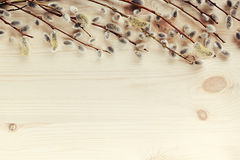 Spring wooden background with branches of willow. Copy space. Stock Photography