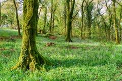 Spring Woodland Stock Photos