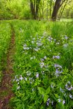 Spring Woodland Foliage Illinois Royalty Free Stock Images