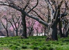 Spring woods Stock Photo