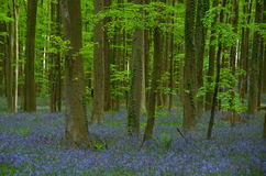 Spring woods Stock Image