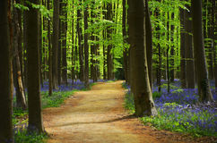 Spring woods Royalty Free Stock Images