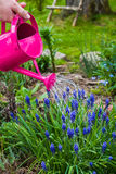 Spring works garden watering plants watering can Stock Photos