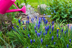 Spring works garden watering plants watering can Royalty Free Stock Images