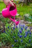 Spring works garden watering plants watering can Royalty Free Stock Photography