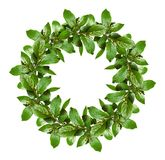 Spring wreath with green leaves and small flower buds. Isolated on white background. Flat lay royalty free stock photo
