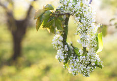 Spring wreath from lily of the valley Royalty Free Stock Images