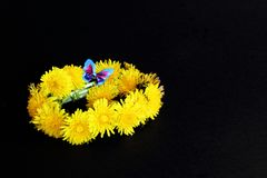 Spring wreath of yellow dandelion flowers with bright blue decorative butterfly on black background. Symbolic concept — spring, royalty free stock image