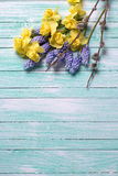 Spring yellow and blue  flowers and pussy willow on turquoise wo Stock Photos