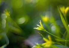 Spring yellow flower on a blurred fantastic background. With luminescence Stock Image