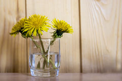 Spring yellow flowers - dandelions mother and stepmother Stock Photography
