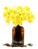 spring yellow flowers in a glass vase Stock Photography