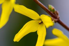 Spring yellow flowers on green background. textures.  Royalty Free Stock Images