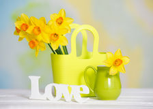 Spring yellow flowers and love sign Royalty Free Stock Photo