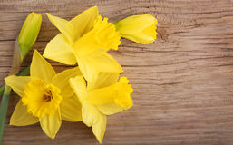 Spring yellow flowers. Narcissus on wood Stock Photos