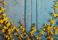 Spring yellow flowers on old  wooden background Royalty Free Stock Photography