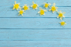 Spring yellow flowers on old  wooden background Royalty Free Stock Image