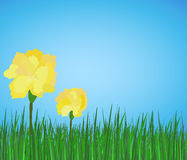 Spring yellow flowers peony on green grass. Spring yellow flowers on green grass on blue sky Stock Photos
