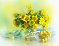 Spring yellow flowers in a vase Royalty Free Stock Photos