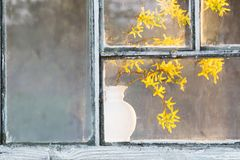 Spring yellow flowers in vase on window royalty free stock photos