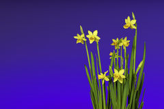 Spring and Easter flowers Royalty Free Stock Photo