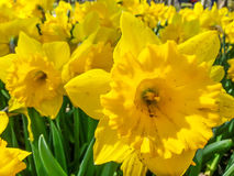 Spring in yellow Stock Image