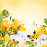 Spring yellow primrose and butterfly Royalty Free Stock Photos