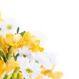 Spring yellow primrose and daisies Stock Photo