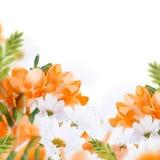 Spring yellow primrose Royalty Free Stock Images