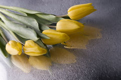 Spring  yellow tulip  blossom on grey  background. Beautiful  yellow spring cheerful tulip blossom  over wet  grey mirror  background Stock Photo
