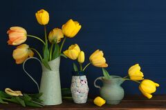 Spring Yellow Tulips Still Life with green vases on a wood shelf or table with dark navy blue boards background for copy space.  I