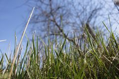 Spring young grass royalty free stock images
