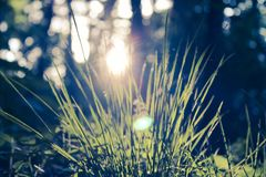 Spring young grass in the morning sun. stock photography