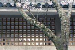 Spring zen Stock Image
