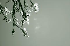 Spring zitting op Royalty-vrije Stock Foto