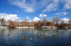 Spring Zong-jiao-lu-kang Park with Birds Royalty Free Stock Photography
