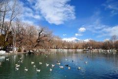 Spring Zong-jiao-lu-kang Park with Birds Stock Photo