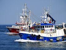 Springa för fiskebåtar till hamnen royaltyfri fotografi