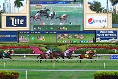 Springa för hästar ner till mållinjen Royaltyfri Bild
