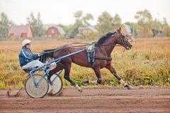 Springa för travaaveln för hästar Royaltyfri Bild