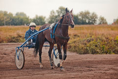 Springa för travaaveln för hästar Arkivbild